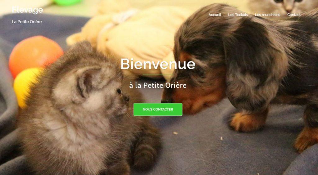 Elevage de Teckels et de Munchkins de La Petite Orière